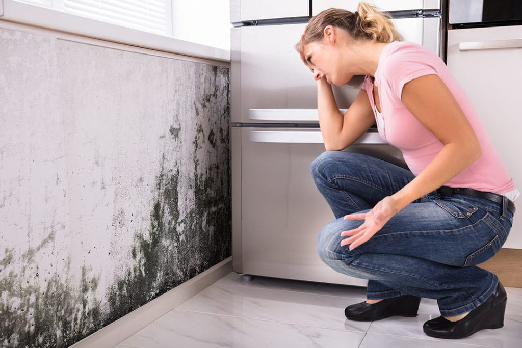 Mold Damage Insurance Claims Lawyer in Florida