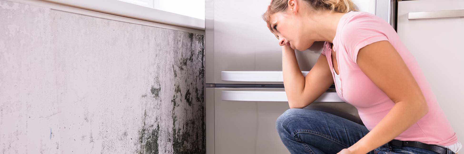 Mold Damage Insurance Claims Adjuster in Florida