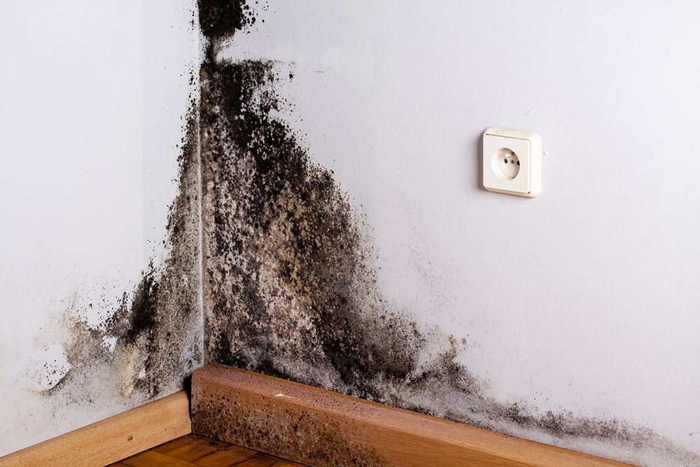 Florida Property Mold Claim Lawyer - Louis Law Group
